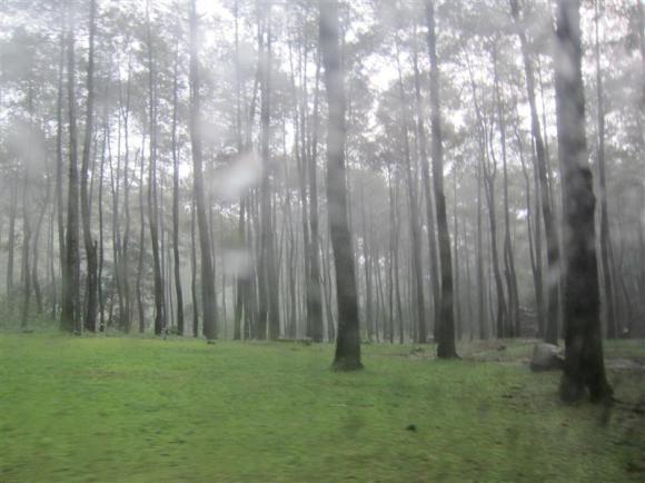 Pemandangan hijau :)