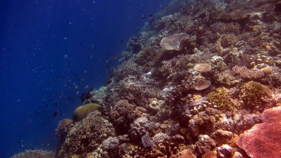 Underwater Taka Bonerate (13)